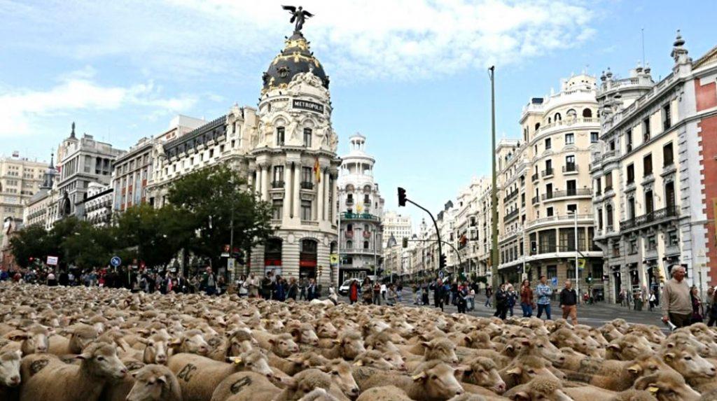 La calle de Alcalá repleta de ovejas durante la fiesta de la Transhumancia.