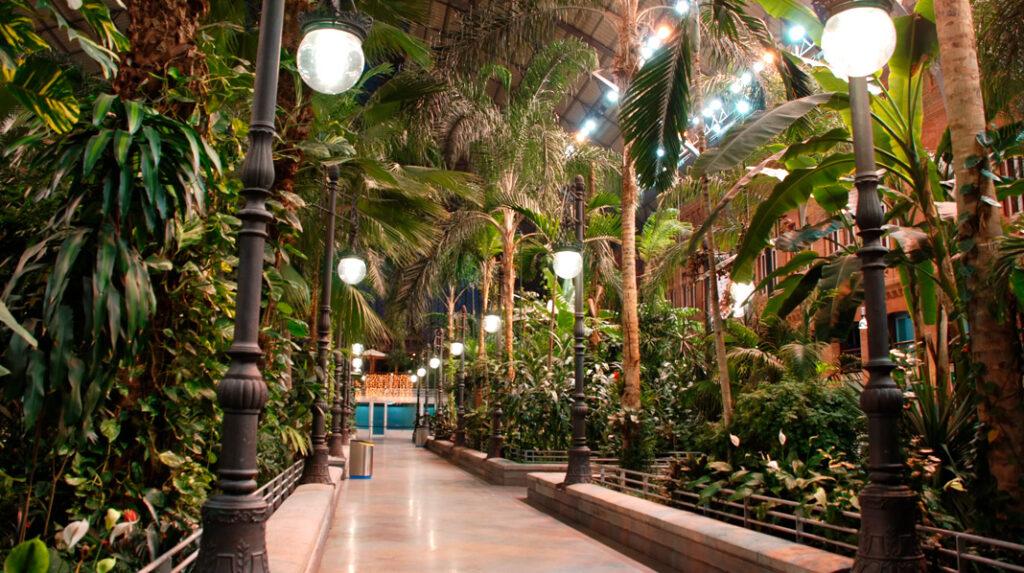El Jardín Tropical de la Estación de Atocha, visto desde la altura del suelo.