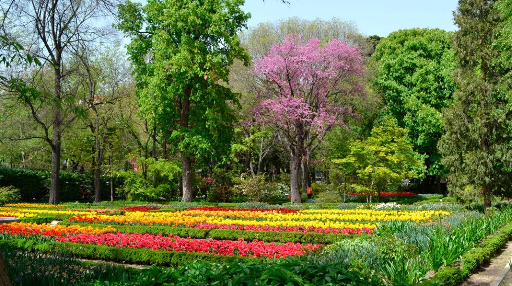 Coloridos tulipanes adornando la terraza de los cuadros en el Jardín Botánico de Madrid.