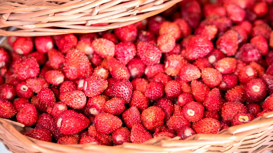 Características fresas de Aranjuez, de pequeño tamaño y fuerte sabor.