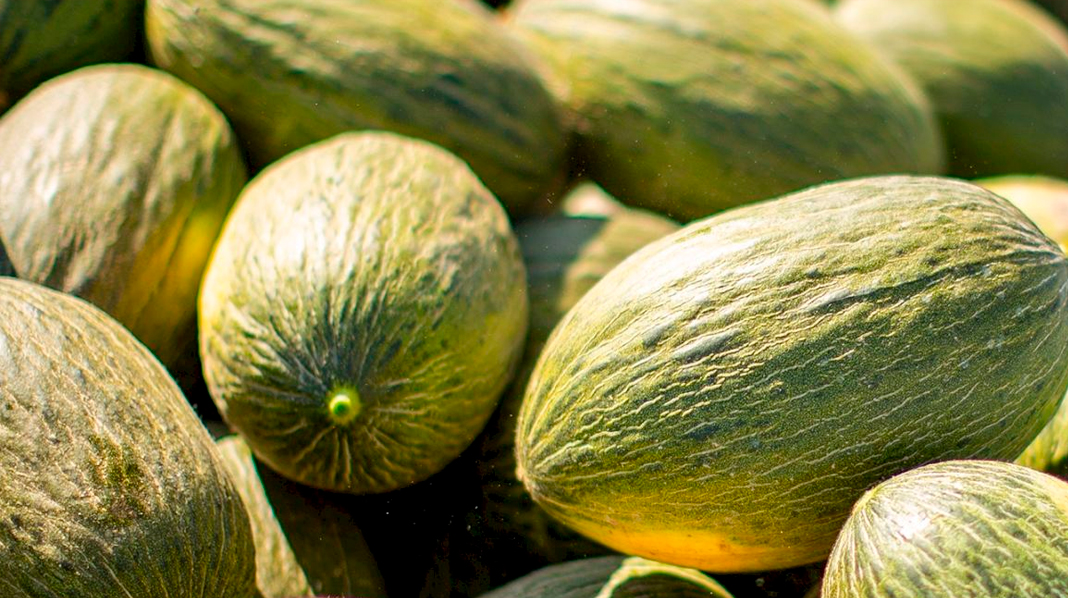 Característicos melones de piel de sapo de Villaconejo.