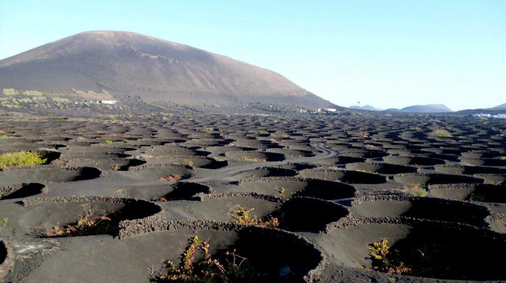 """En La Geria, la vid se cultiva en hoyos rodeada en hasta tres metros de """"rofe"""" o ceniza volcánica."""